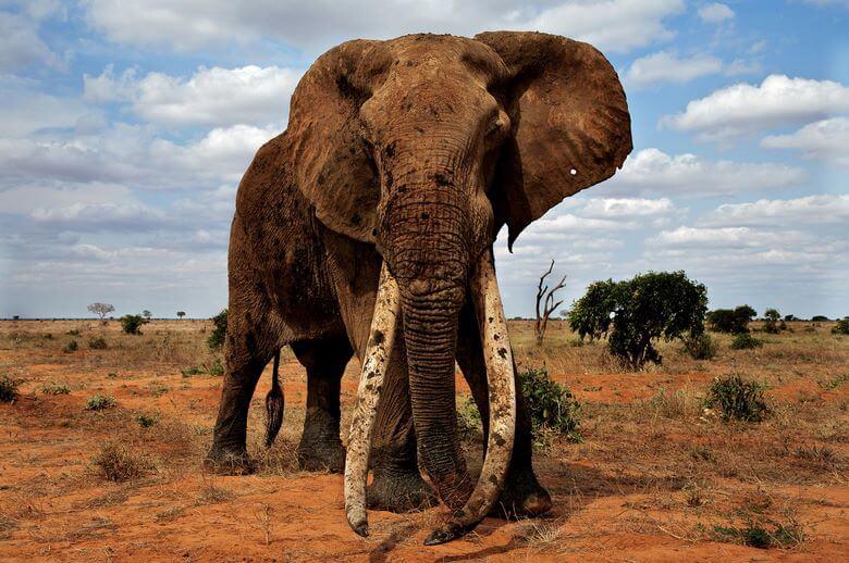 بزرگترین جاندار روی کره زمین,بزرگترین جانداران روی کره زمین,بزرگترین جانوران روی زمین,