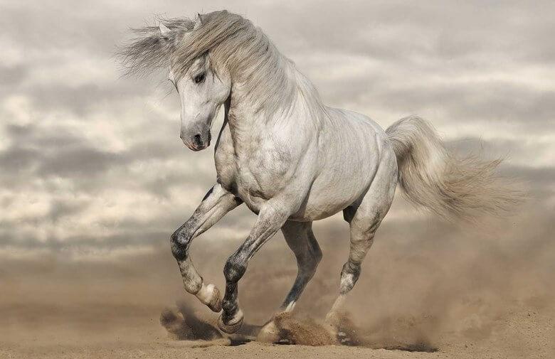 زیباترین اسب های جهان,زیباترین اسب های جهان عکس,زیباترین اسب های دنیا,