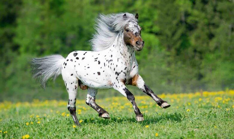 زیباترین اسب دنیا,زیباترین اسب عرب دنیا,زیباترین اسب های جهان