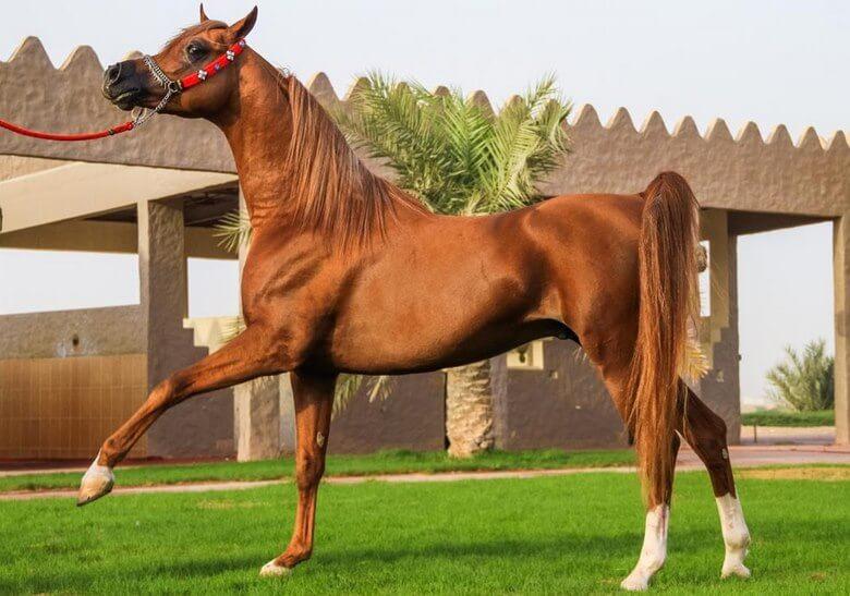 زیباترین اسب های جهان عکس,زیباترین اسب های دنیا,زیباترین اسب های دنیا و جهان,
