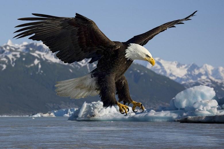 10 عقاب غول پیکر روی زمین,بزرگترین عقاب های جهان,بزرگترین عقاب های دنیا
