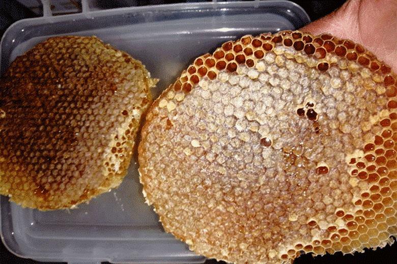 تشخیص عسل طبیعی,خواص درمانی عسل,خوش طعم ترین عسل
