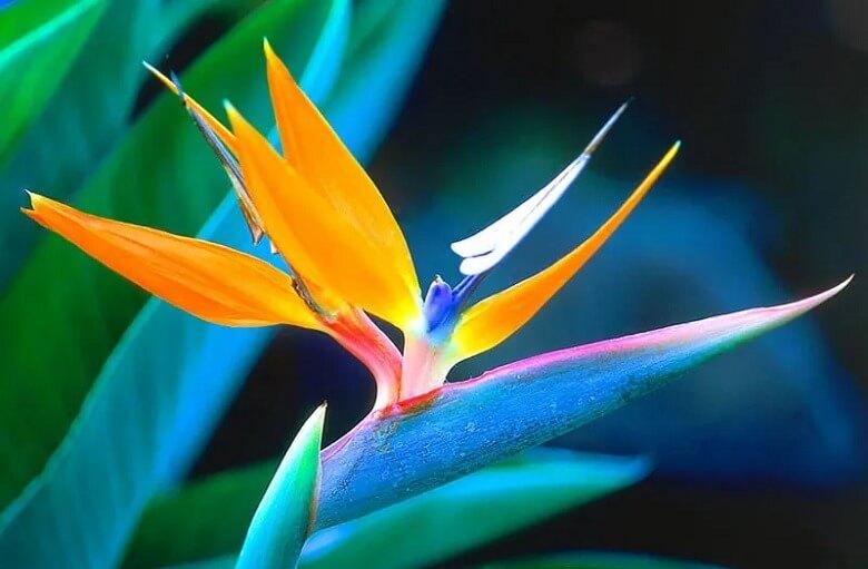 زیباترین گل های دنیا,زیباترین گل های طبیعی جهان,زيباترين گل هاي جهان,