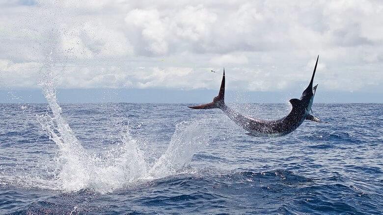 سریع ترین جانوران روی زمین,سریع ترین حیوانات جهان,سریع ترین حیوانات خشکی,