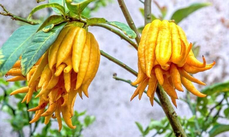خوشمزه ترین میوه جهان,خوشمزه ترین میوه دنیا,خوشمزه ترین میوه های دنیا