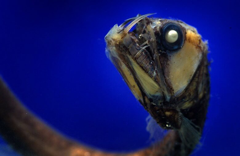 موجودات اعماق دریاها,موجودات دریایی عجیب,موجودات دریایی عجیب و غریب,