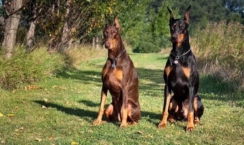 10 سگ باهوش جهان,باهوش ترین سگ دنیا,باهوش ترین سگ جهان