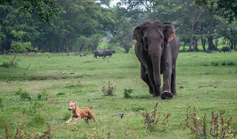 خطرناک ترین حیوانات استرالیا,خطرناک حیوانات جهان,ده حیوان خطرناک,