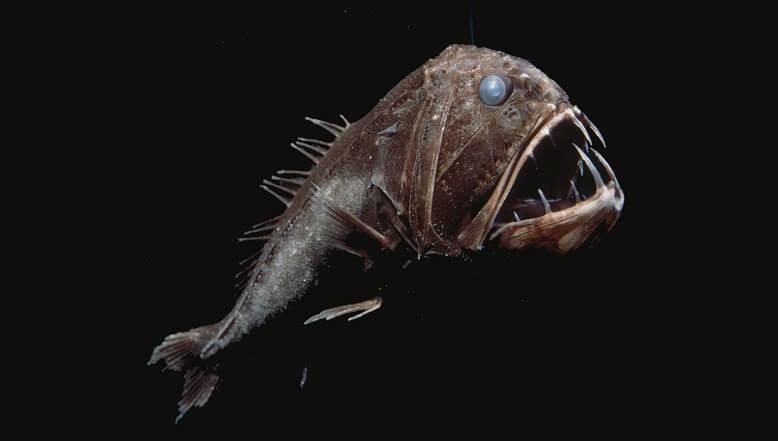 ترسناک ترین موجودات اعماق دریاها,ترسناک ترین موجودات دریایی,عجیب ترین موجودات دریایی,