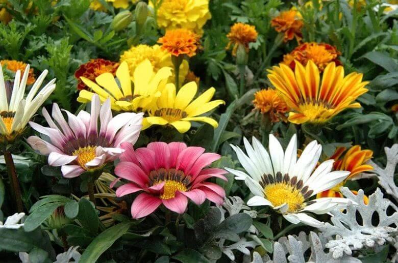 زیباترین گل های جهان,زیباترین گل های جهان طبیعی,زیباترین گل های جهان عکس,