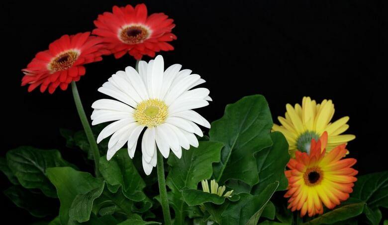 گیاه تمیز کننده هوا,گیاهان تصفیه کننده هوا,گیاهان تصفیه کننده هوای آپارتمان