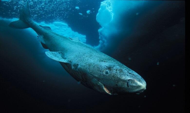 مسن ترین حیوان جهان,مسن ترین حیوان دنیا,کهن ترین حیوانات جهان