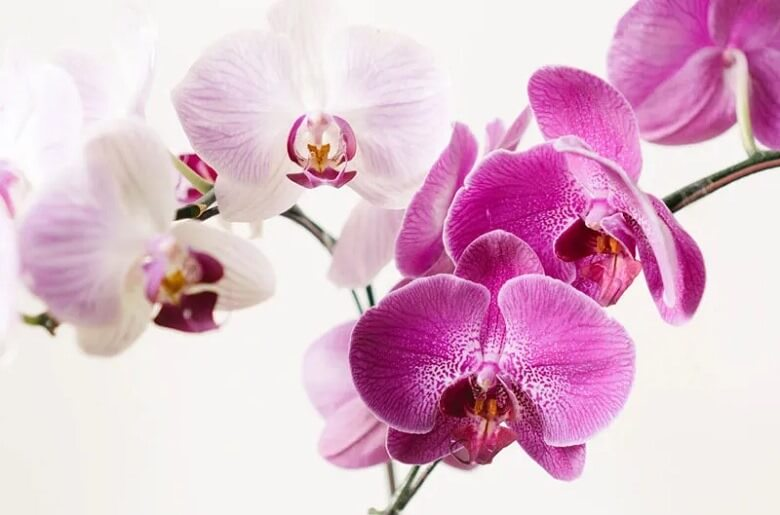 زیباترین گل های جهان عکس,زیباترین گل های دنیا,زیباترین گل های طبیعی جهان,
