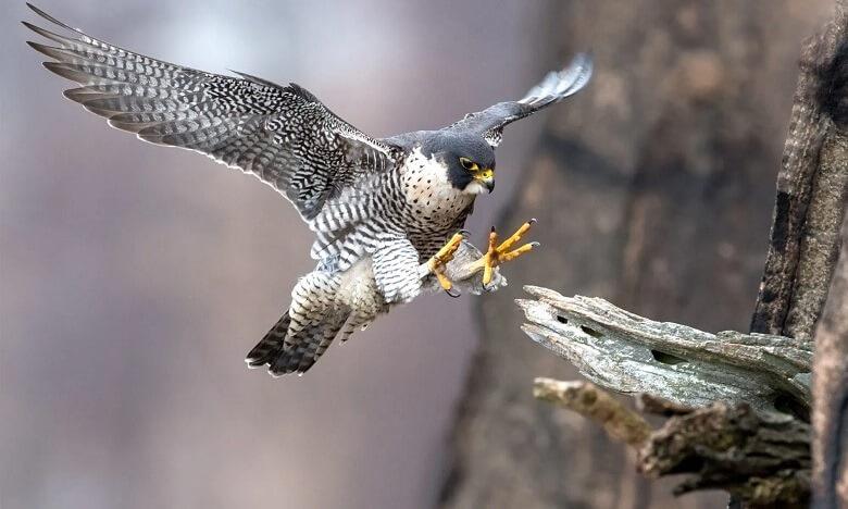 سریع ترین جانور جهان,سریع ترین جانور دریایی,سریع ترین جانور روی زمین,