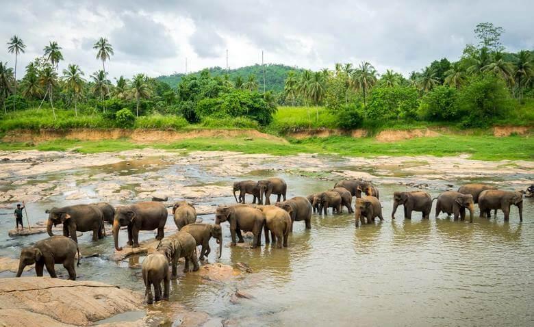 بهترین زمان برای سفر به سریلانکا,بهترین زمان سفر به سریلانکا,بهترین فصل سفر به سریلانکا,