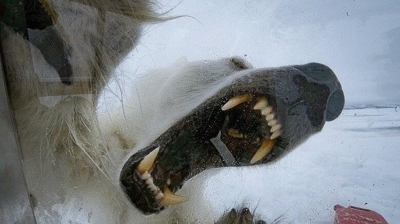 ۱۰ حیوان خطرناک جهان,10 حیوان خطرناک جهان,حیوان خطرناک,