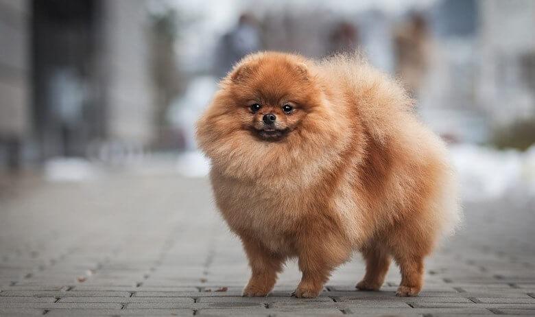 گرانترين سگ دنيا,گرانترين سگ هاي دنيا,گرانترین سگ دنیا,
