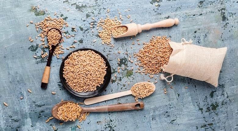 خواص جوانه گندم,خواص جوانه گندم طب سنتی,فواید جوانه گندم