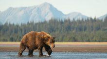 تصویر از 10 مورد از مشهورترین و بزرگترین جانداران روی کره زمین