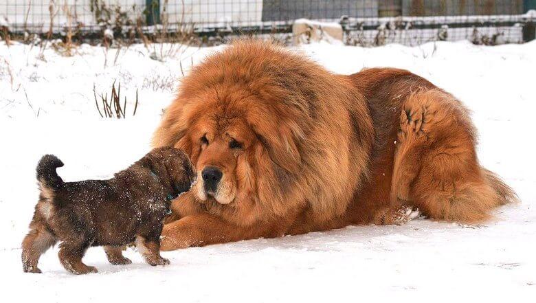 حیوانات گران قیمت,گران ترین حیوانات جهان,گران ترین حیوانات دنیا