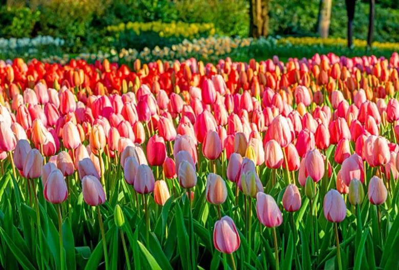 زیباترین گل های جهان طبیعی,زیباترین گل های جهان عکس,زیباترین گل های دنیا,
