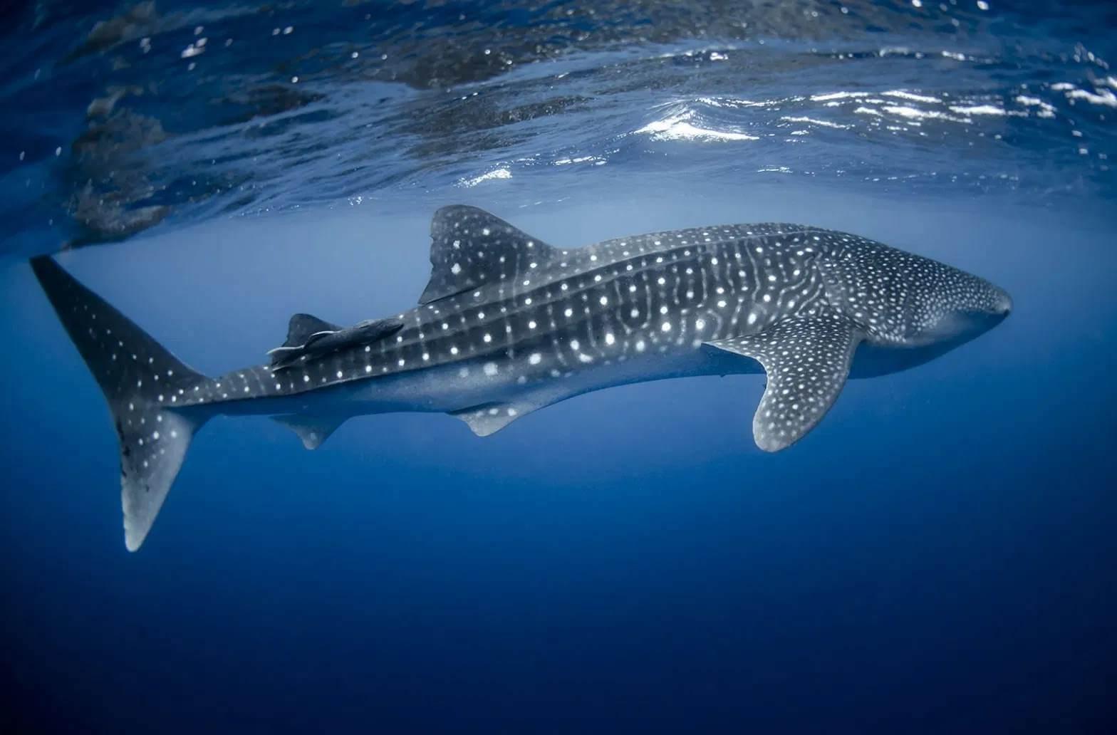 بزرگترین حیوانات کره زمین,بزرگترین جاندار روی کره زمین,بزرگترین جانداران روی کره زمین,