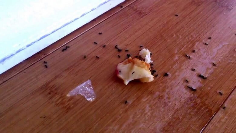 از بین بردن مورچه ها,از بین بردن مورچه ها در خانه,از بین بردن مورچه های خیلی ریز