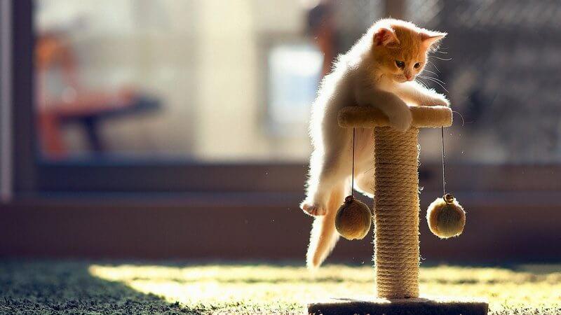 خواص نگهداری گربه,خواص نگهداری گربه در خانه,شرایط نگهداری گربه