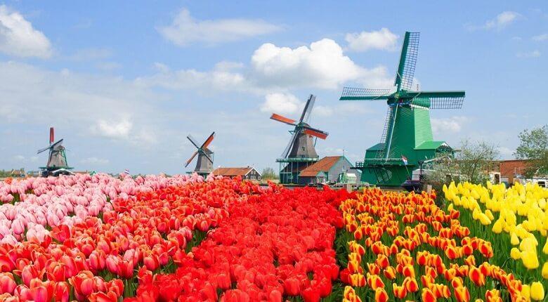 بهترین سوغاتی هلند,سوغات معروف هلند,سوغاتي هلند