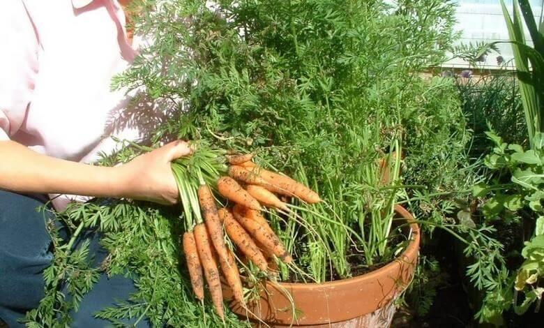 روش کاشت سبزی در منزل,كاشت سبزي در منزل,كاشتن سبزي در خانه,