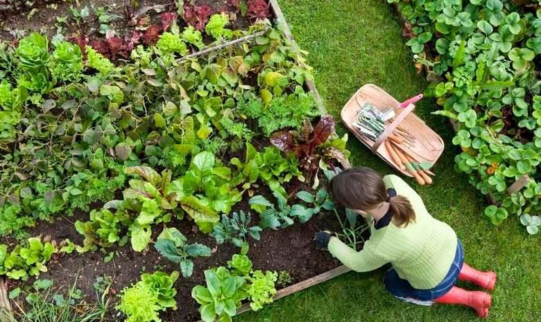 روش کاشت سبزی در منزل,كاشت سبزي در منزل,كاشتن سبزي در خانه