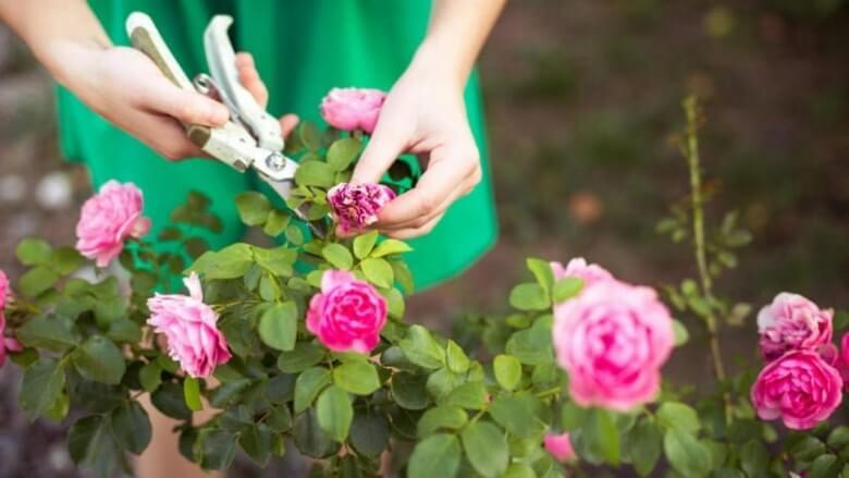 افزایش عمرگل شاخه,افزایش عمرگل شاخه بریده,راز افزایش عمر گلهای تازه
