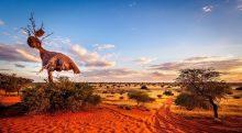 تصویر از 10 تا از عجیب ترین صحراهای دنیا – دره مرگ تا کالاهاری