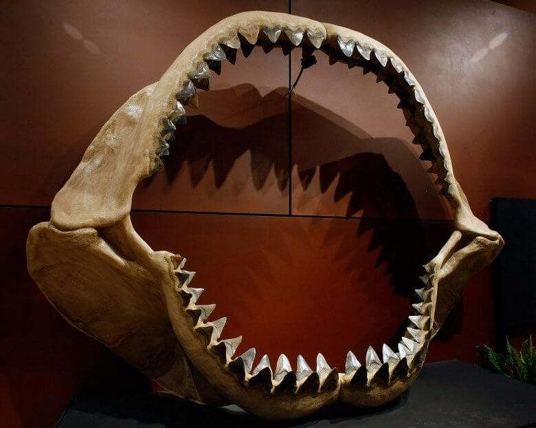 بهترین فسیل های جهان,جالب ترین فسیل دنیا,جالب ترین فسیل ها,