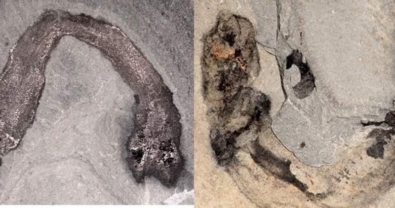 جالب ترین فسیل ها,عجیب ترین فسیل,عجیب ترین فسیل های جهان,
