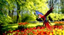 تصویر از 10 تا از عجیب ترین طوطی های جهان